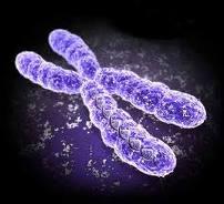 Chromosom 14-Syndrom